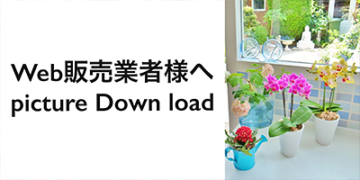 Web販売業者様へ Picture Down load
