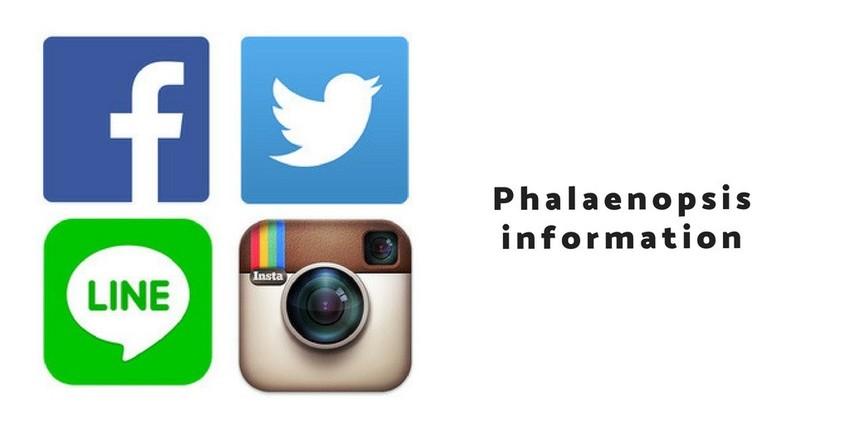 ◆Phalaenopsis infomation◆